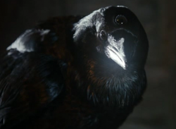 Crow Three eyed HBO.png
