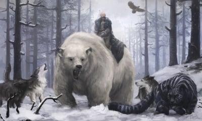 Dog Vs Bear Video