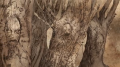 HBO isle of faces trees.png